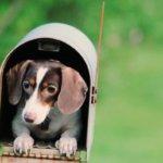 私設私書箱と郵便私書箱の違いと契約時の注意点